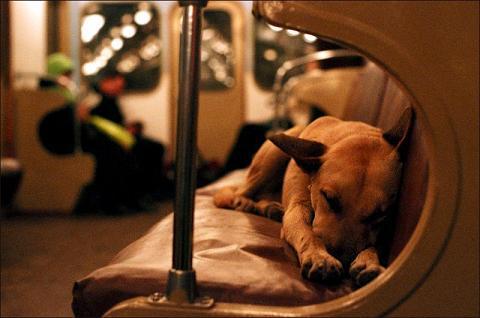 地铁上班狗-大久宝