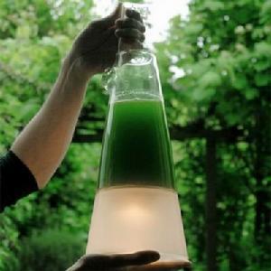 海藻灯-大久宝